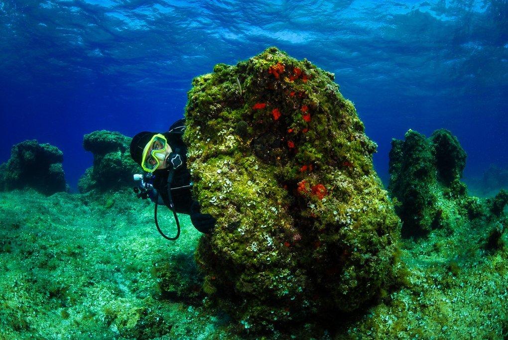 Underwater scene off the Dalmatian coast