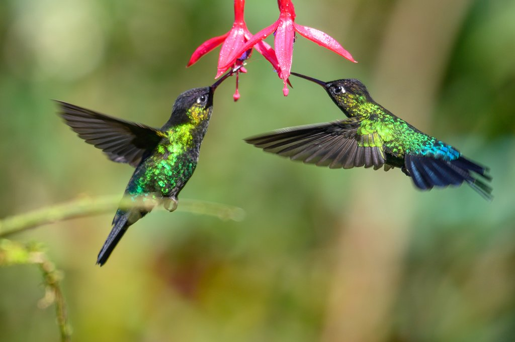 Spot hummingbirds and many other species on your birding adventure