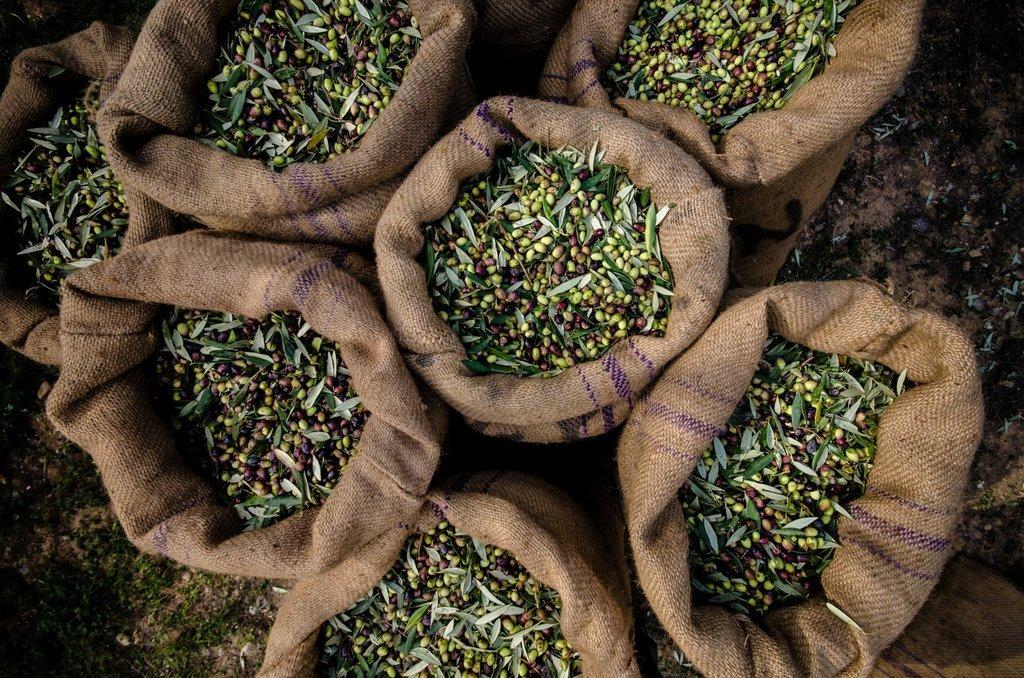Farm-fresh olives