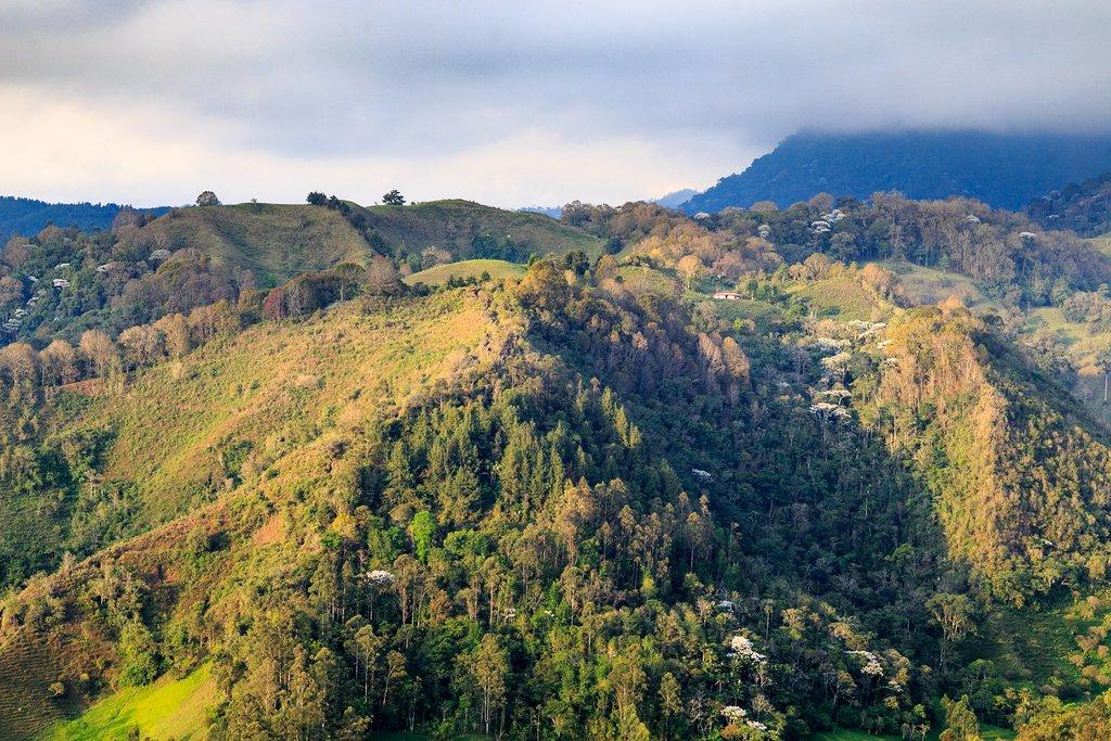Coffee region of Colombia