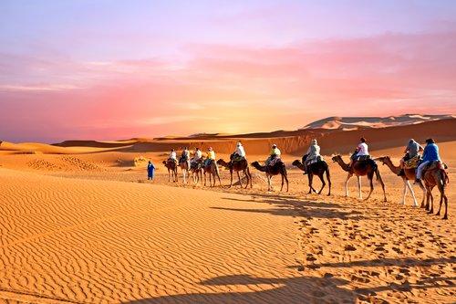 Camel caravan through the Moroccan desert