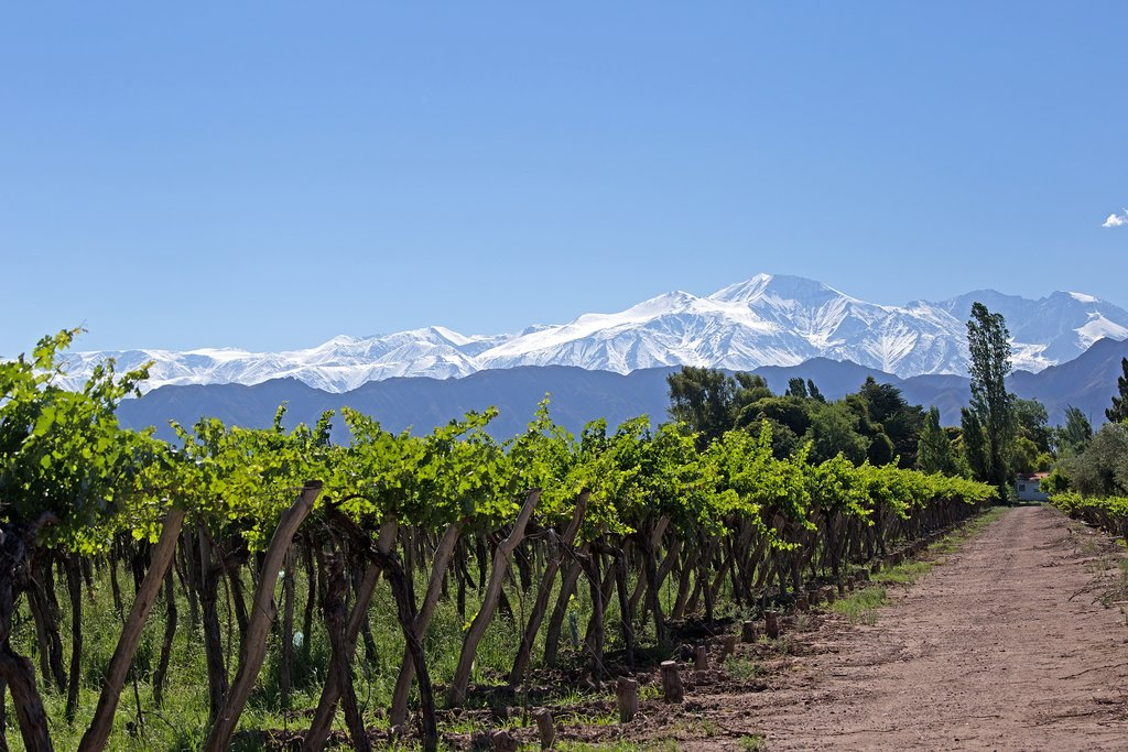 A Malbec vineyard surrounded by mountains
