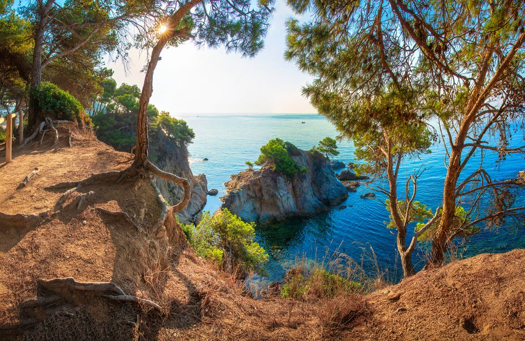 A coastal trail dotted with pine trees in the Costa Brava