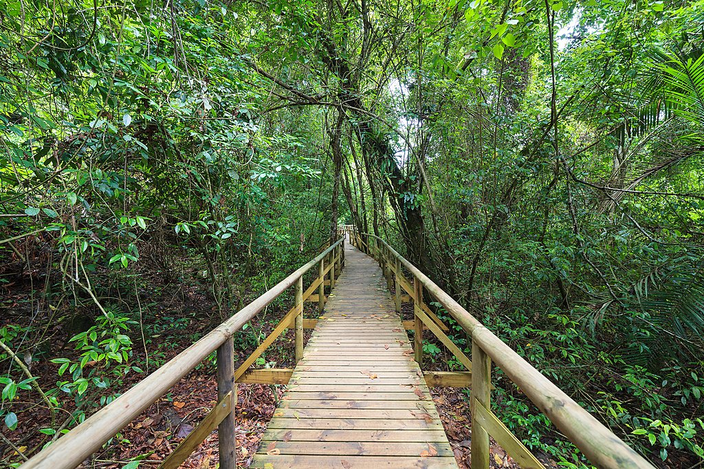 Hiking trail in Manuel Antonio National Park