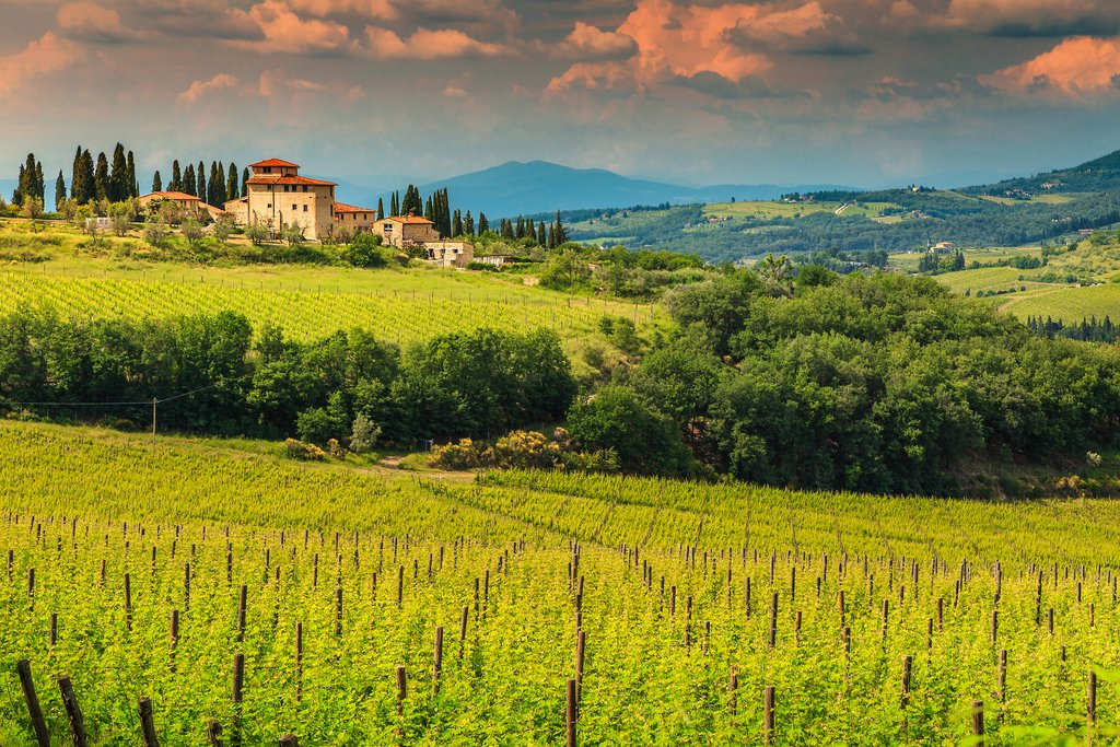 A vineyard in the Chianti region of Tuscany, Italy