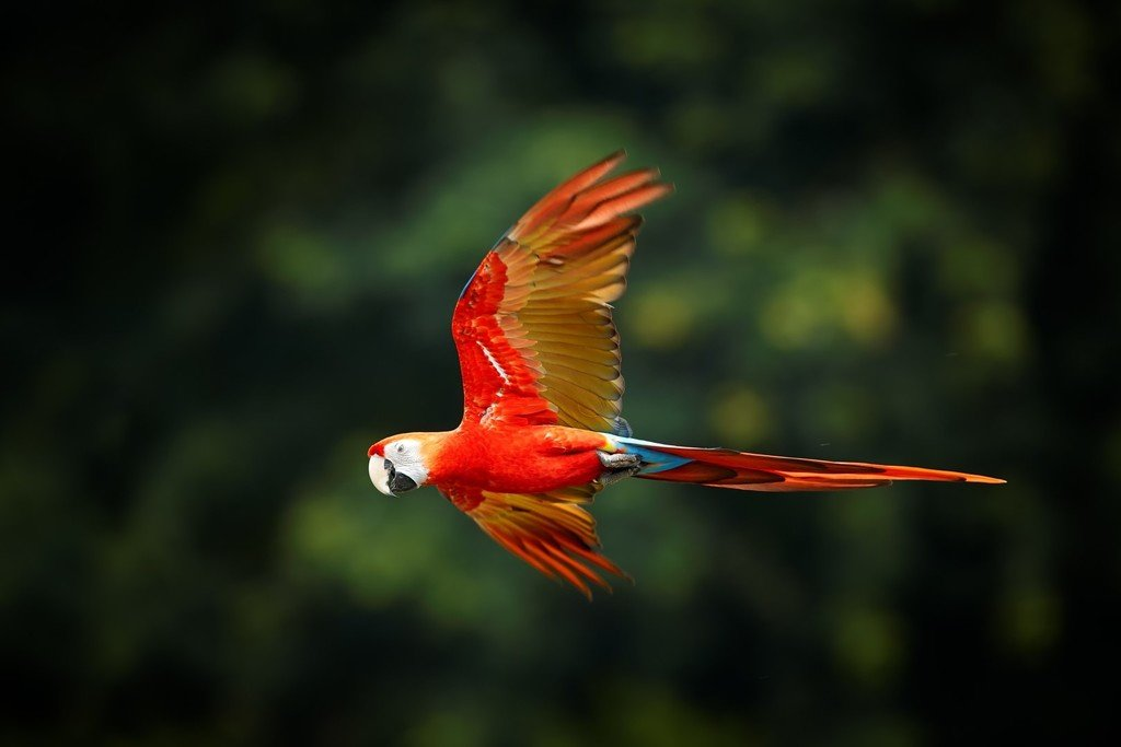 Colorful Macaw in the Amazon