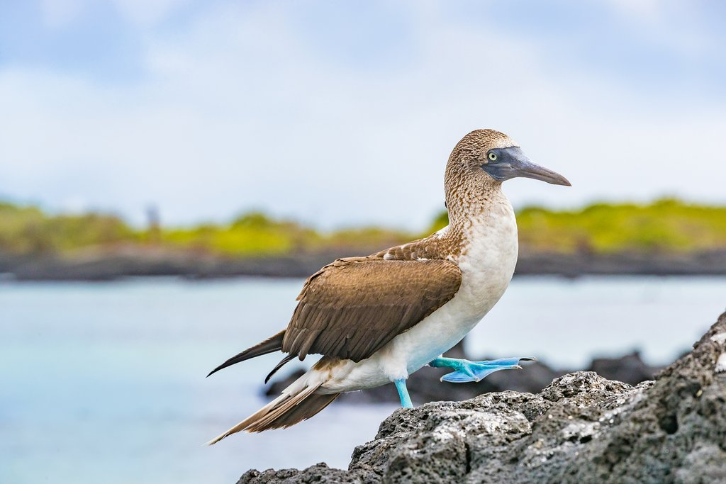 Galápagos Islands in July: Travel Tips, Weather, and More