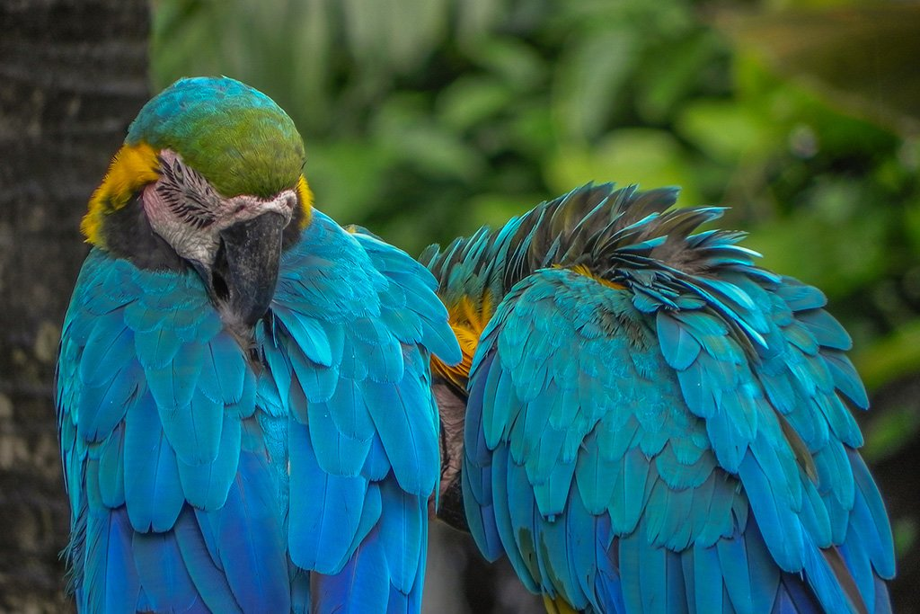 Colombia's Top 5 Bird-Watching Destinations