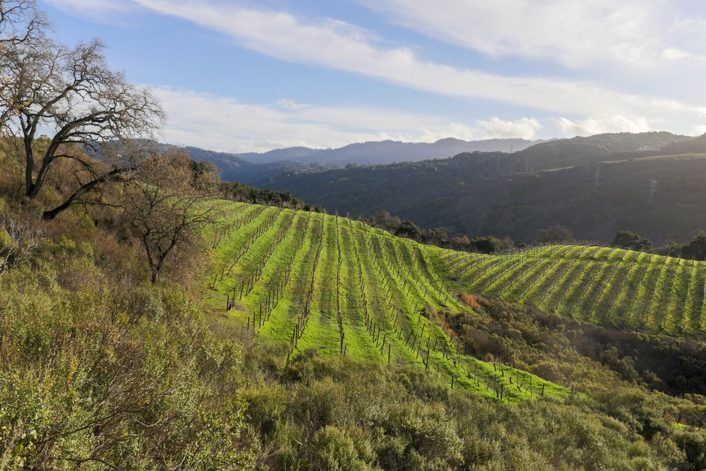 Vineyards in the foothills of the Santa Cruz mountains