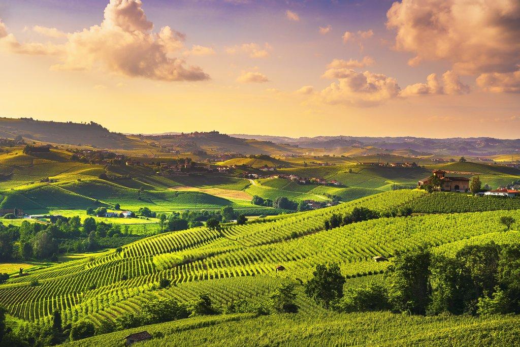 Vineyards near Barolo, Piedmont.