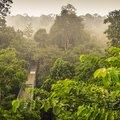 Borneo Eastern Wildlife Adventure - 5 Days