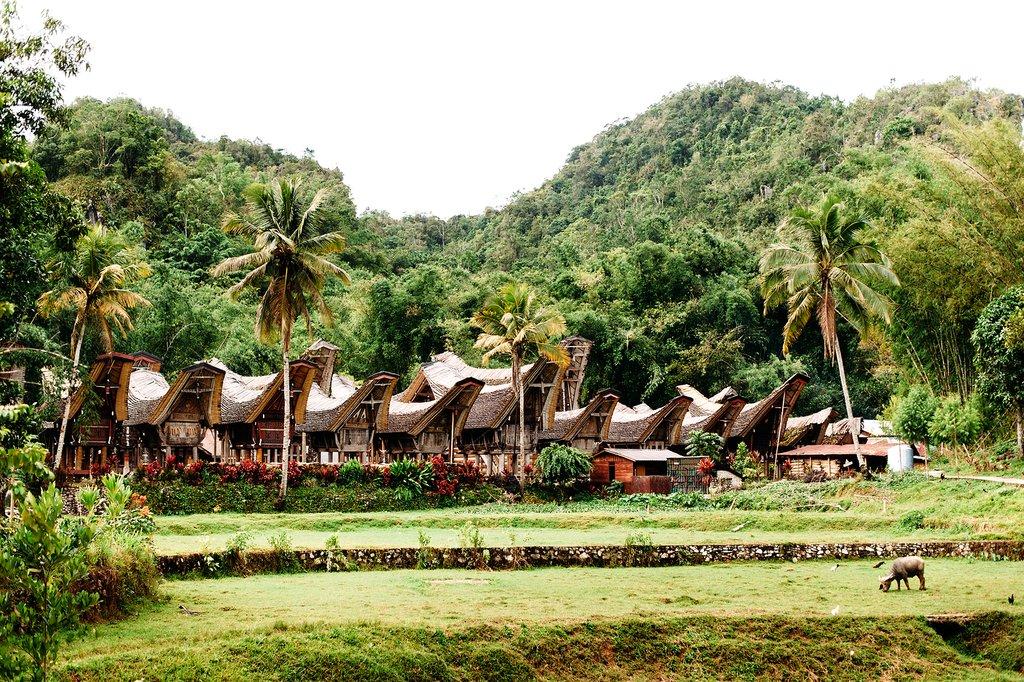 Visit historic Torajan houses in the Tongkonan style