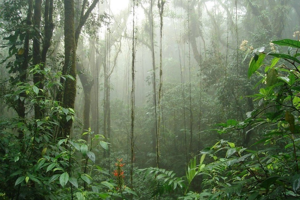 Ultimate Guide to Monteverde: Costa Rica's Lost World
