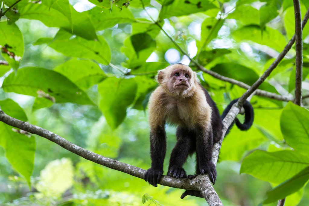 Explore Costa Rica's wildlife with your family