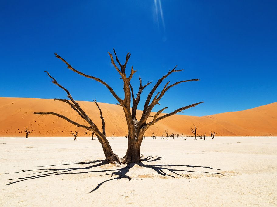 Camelthorn trees in Sossuvlei