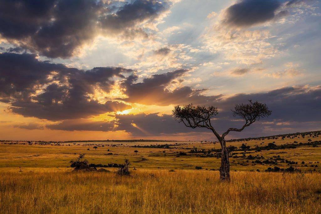 Enjoy Safari in South Africa
