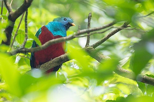 A colorful toucan perches on a tree branch in a Costa Rican forest