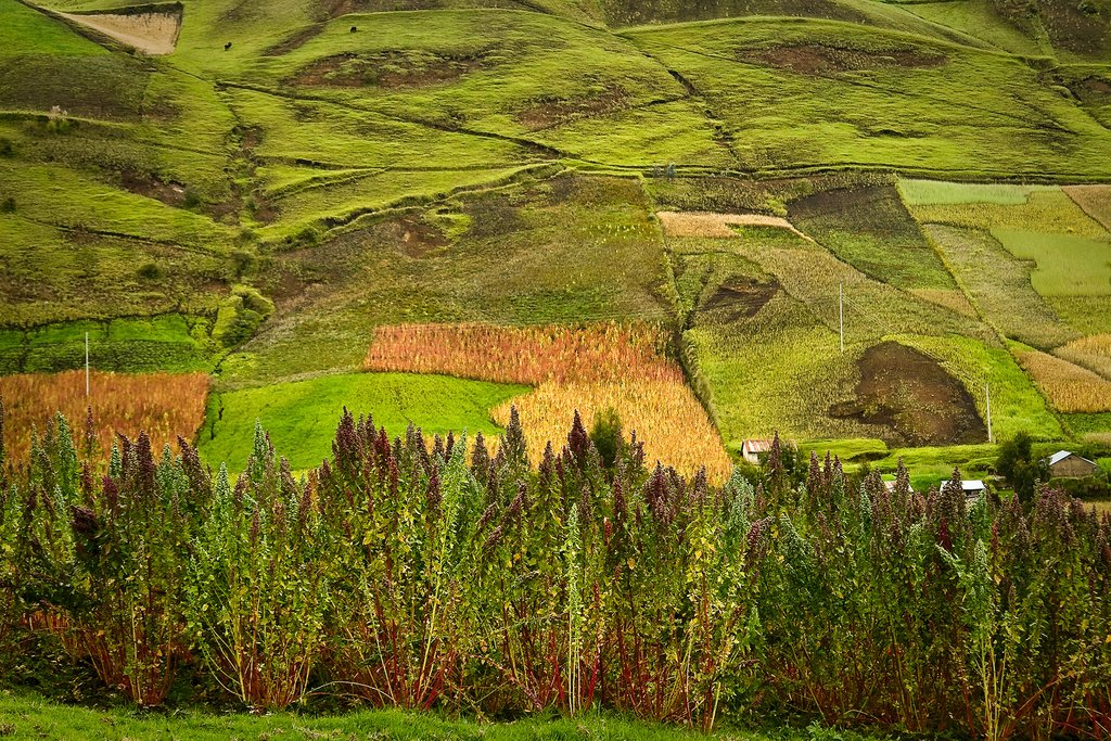 Countryside near Riobamba