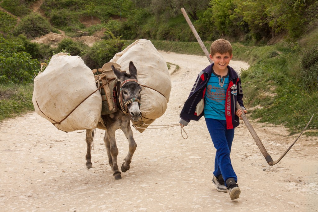 A child leads a pack animal in rural Albania