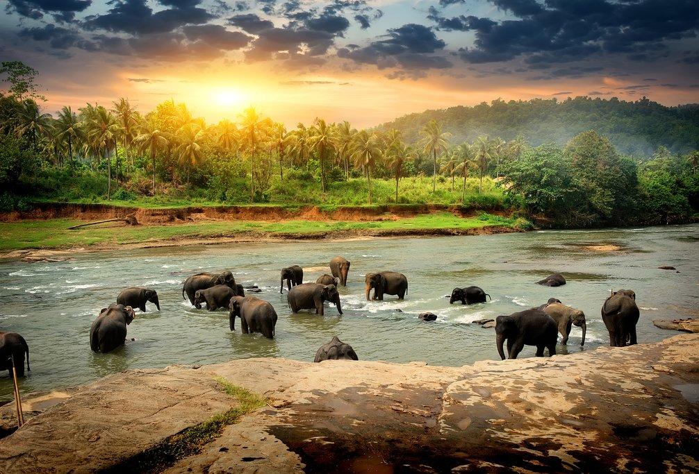Elephants grazing at Yala National Park