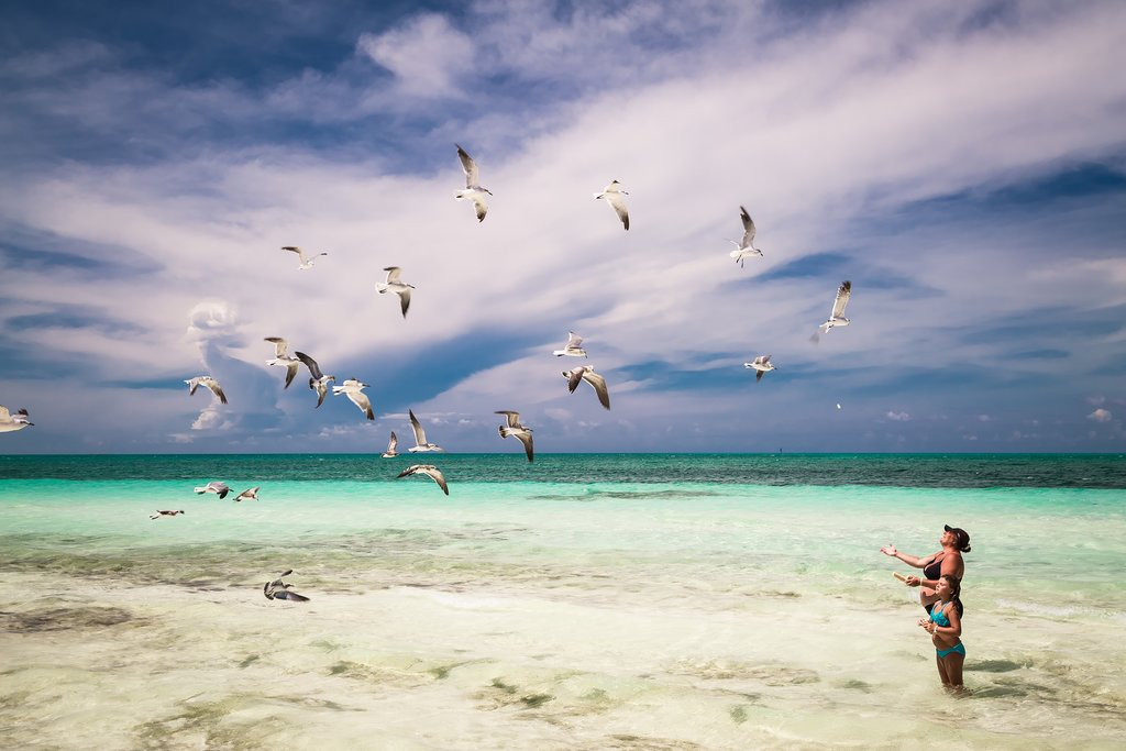Seagulls at the beach in Cuba