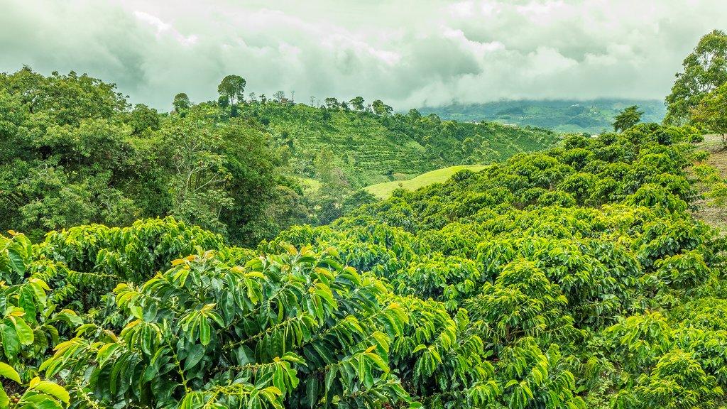 Trekking Colombia's Camino Verde - 8 Days