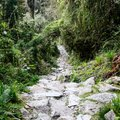 Jungle, Mountains, & Machu Picchu - 9 Days