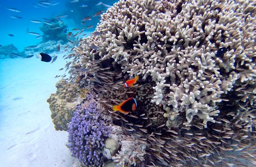 Coral reefs of Okinawa