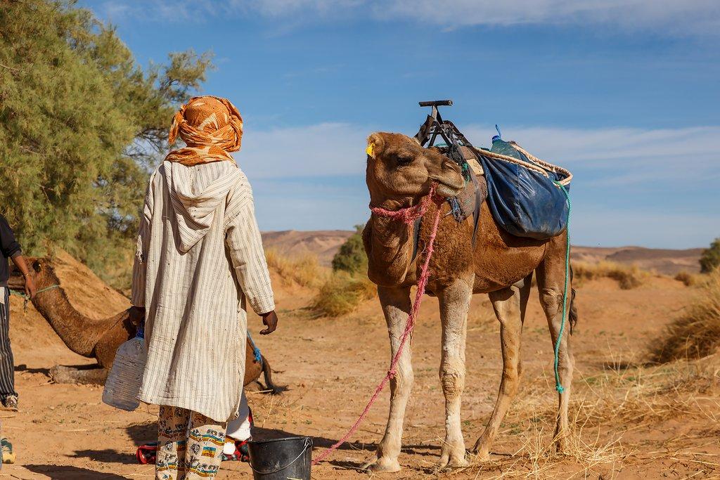 Berber man in national dress stands near a camel, Sahara Desert, Morocco