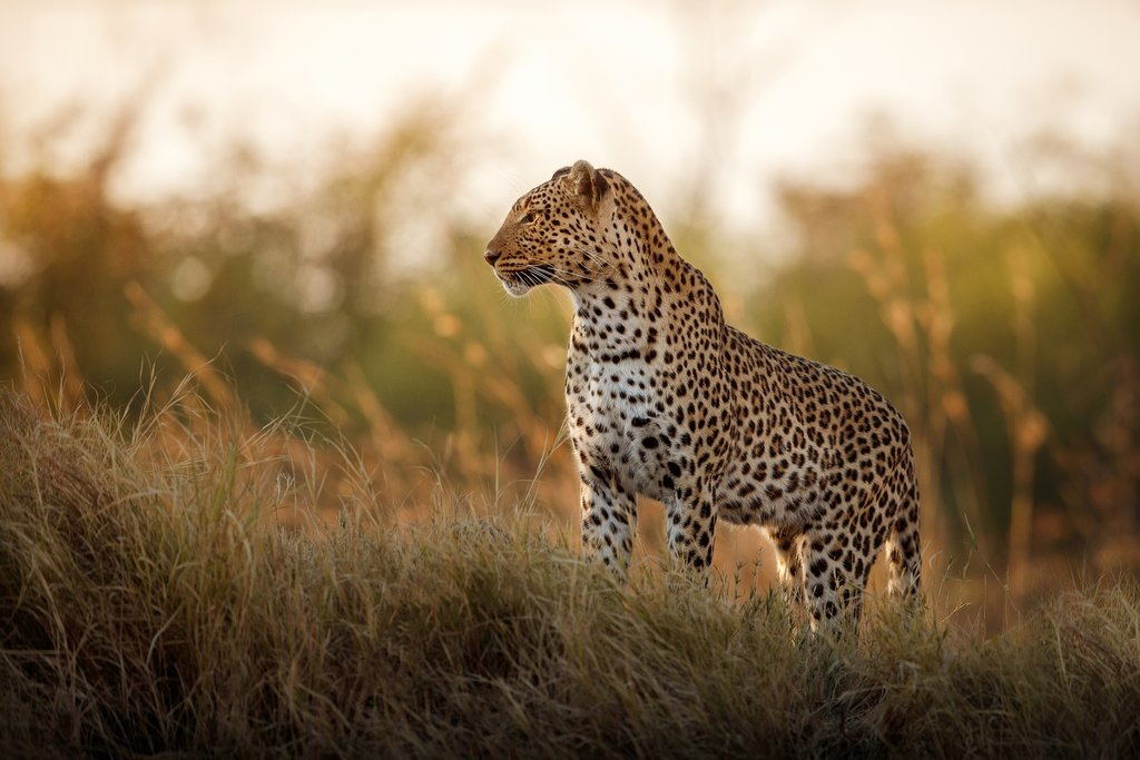 Wildlife spotting in South Africa