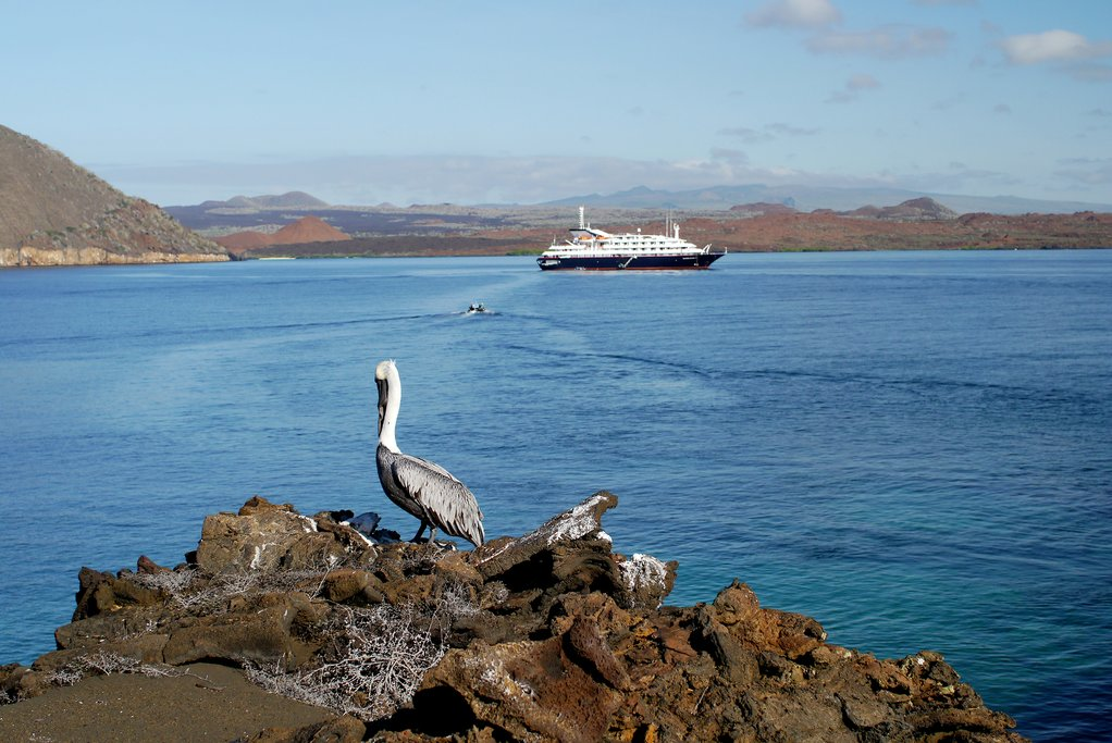 Pelican and a Galapagos Cruise Ship.