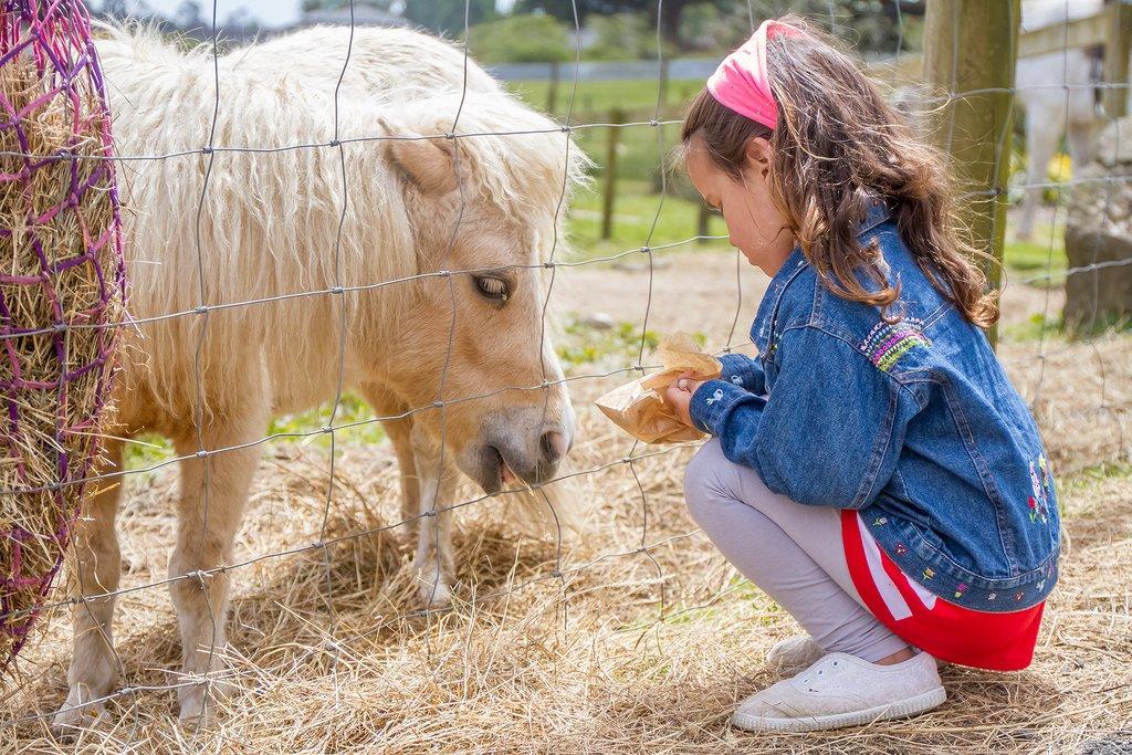 Meet the farm animals at Medena Dolina (Honey Valley), near Dubrovnik