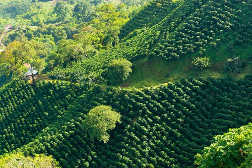 A mountainous plantation in Colombia's Coffee Triangle