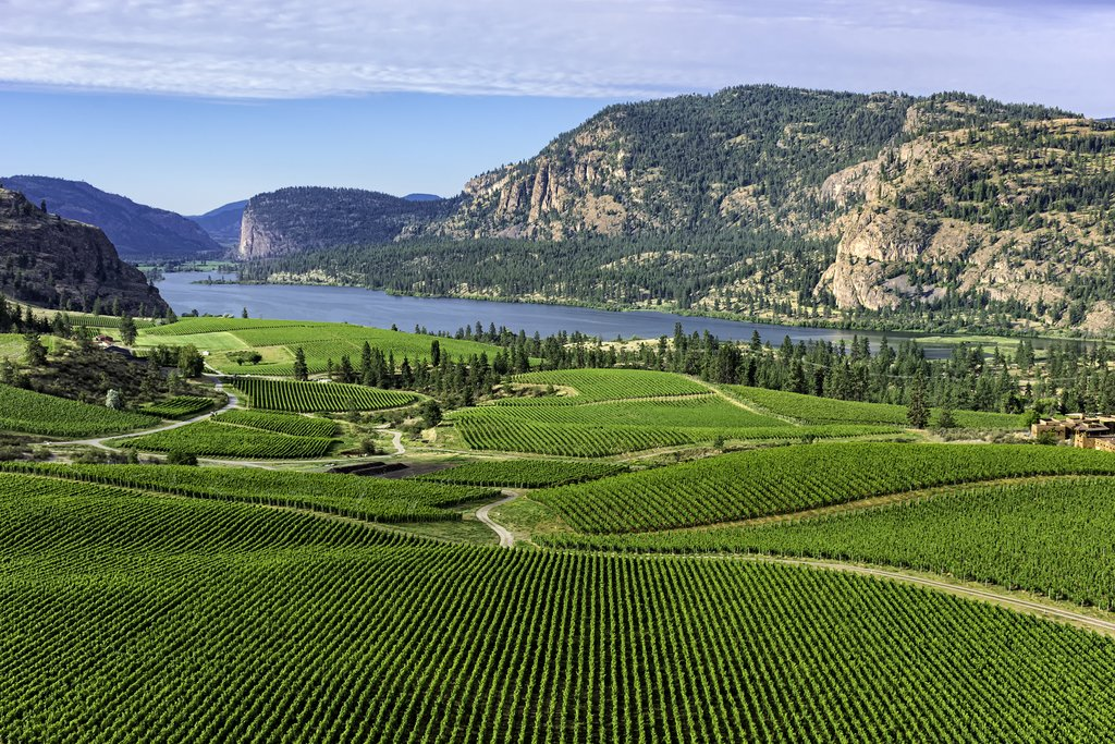 Wine vineyards near Penticton in the Okanagan Valley
