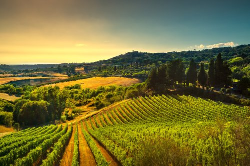 Casale Marittimo village vineyards in Tuscany