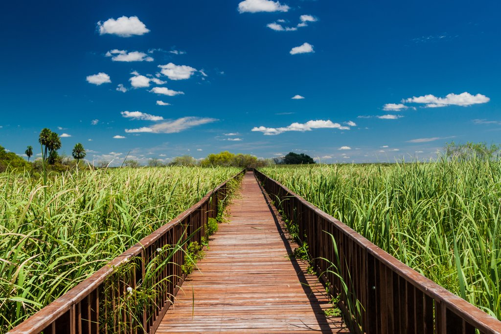 Boardwalk in Iberá Wetlands