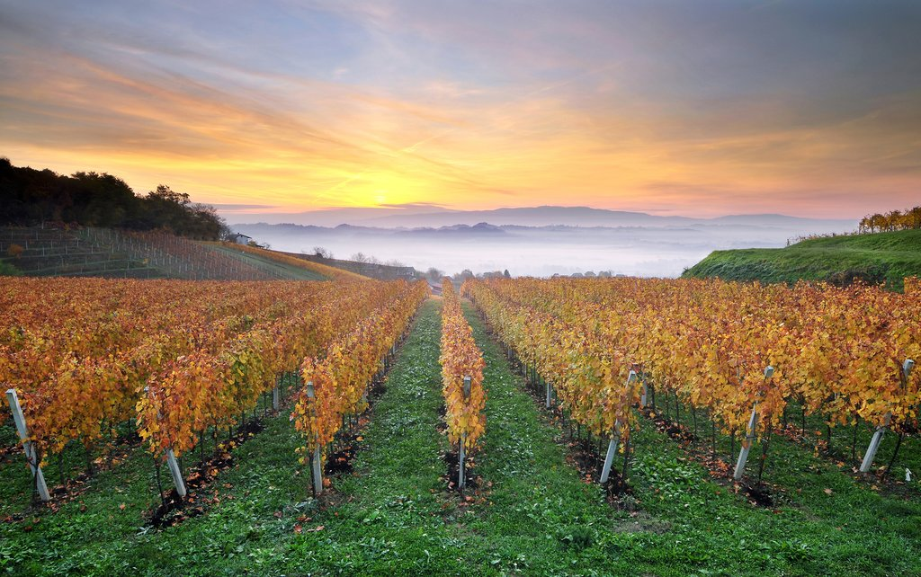 Catch a sunrise in wine country