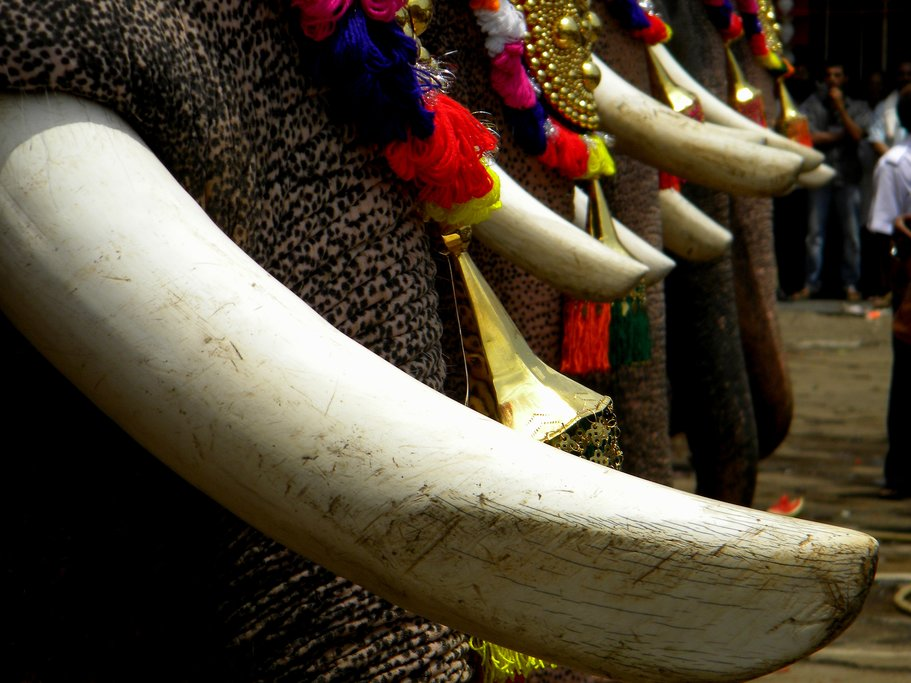 Thrissur Pooram, a Keralan temple festival with elephants