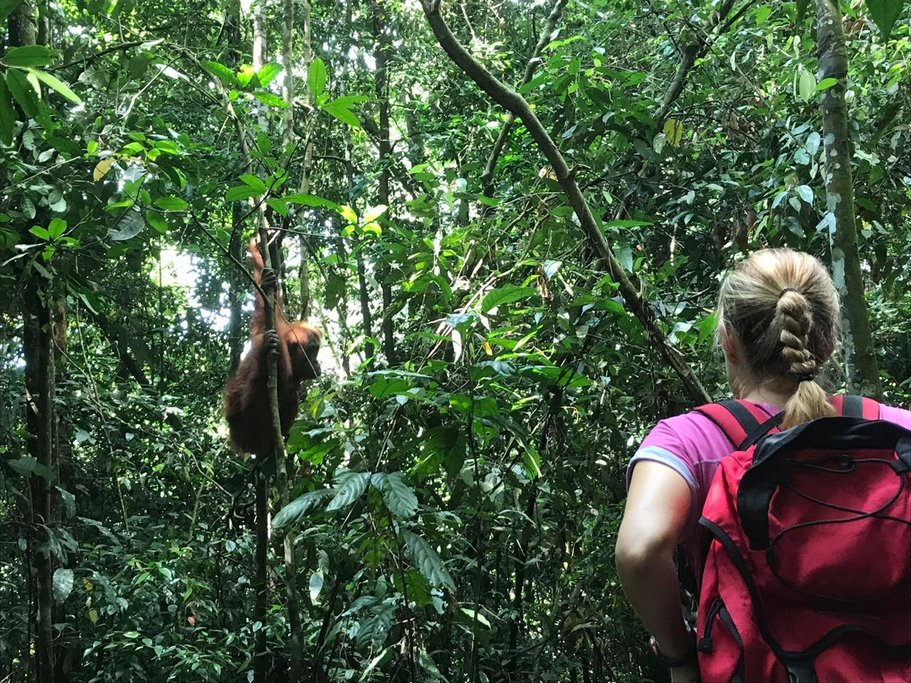 Come face to face with wild orangutans in Gunung Leuser NP
