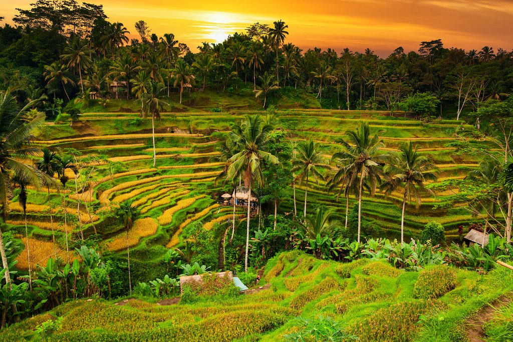 The beautiful rice terraces in Ubud