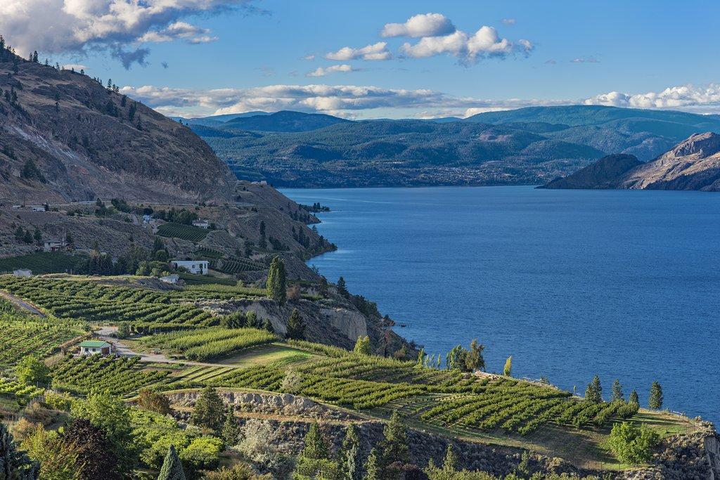 Vineyards above Okanagan Lake near Summerland