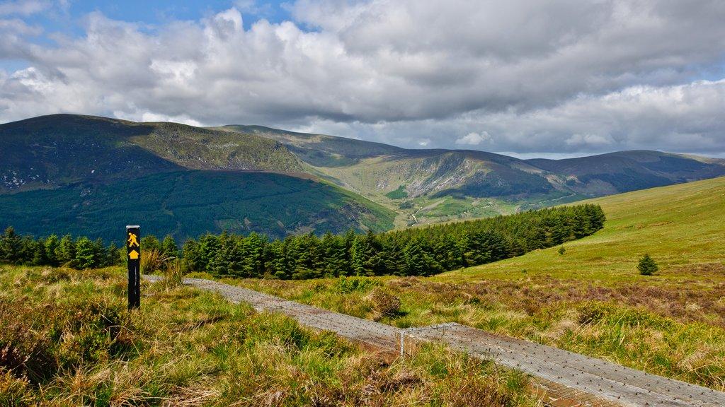 Wicklow Mountains, Ireland