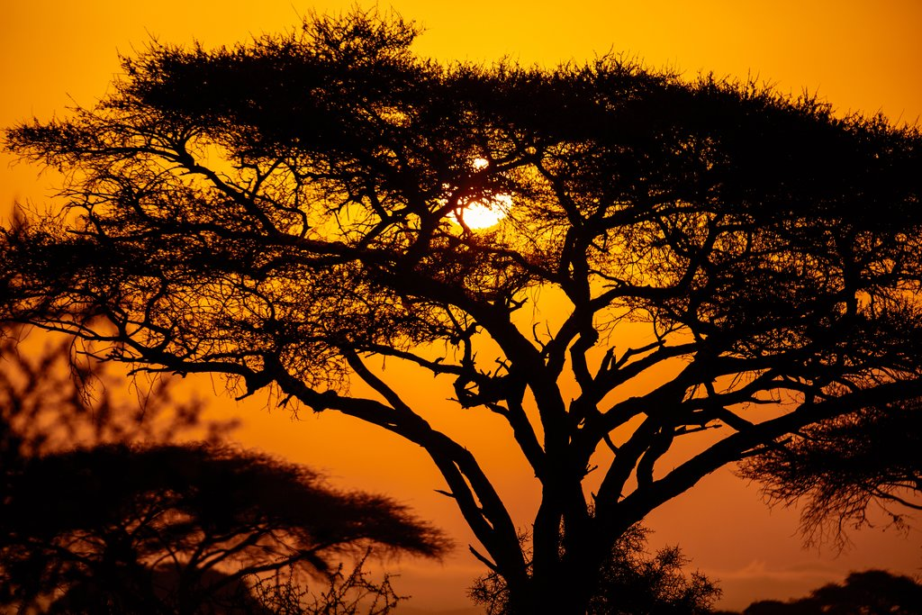 African sunset with acacia tree in Maasai Mara, Kenya. Savannah background in Africa. Typical landscape in Kenya.