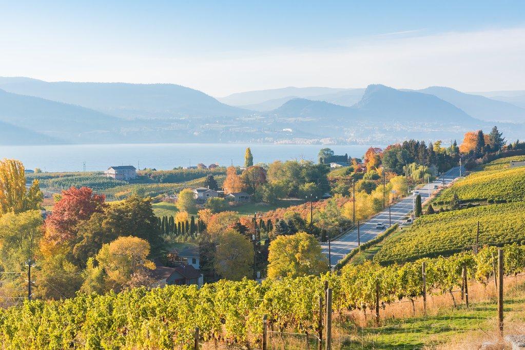 Vineyards along Naramata Bench in the Okanagan Valley