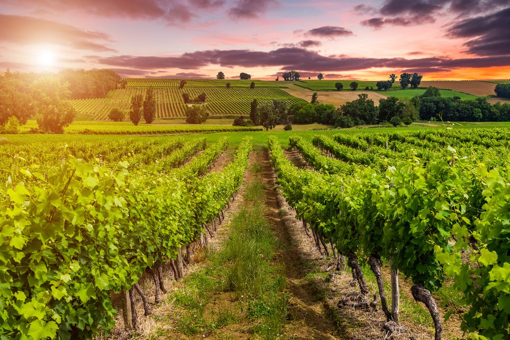 Attend tours and tasting of some of Bordeaux's best vineyards