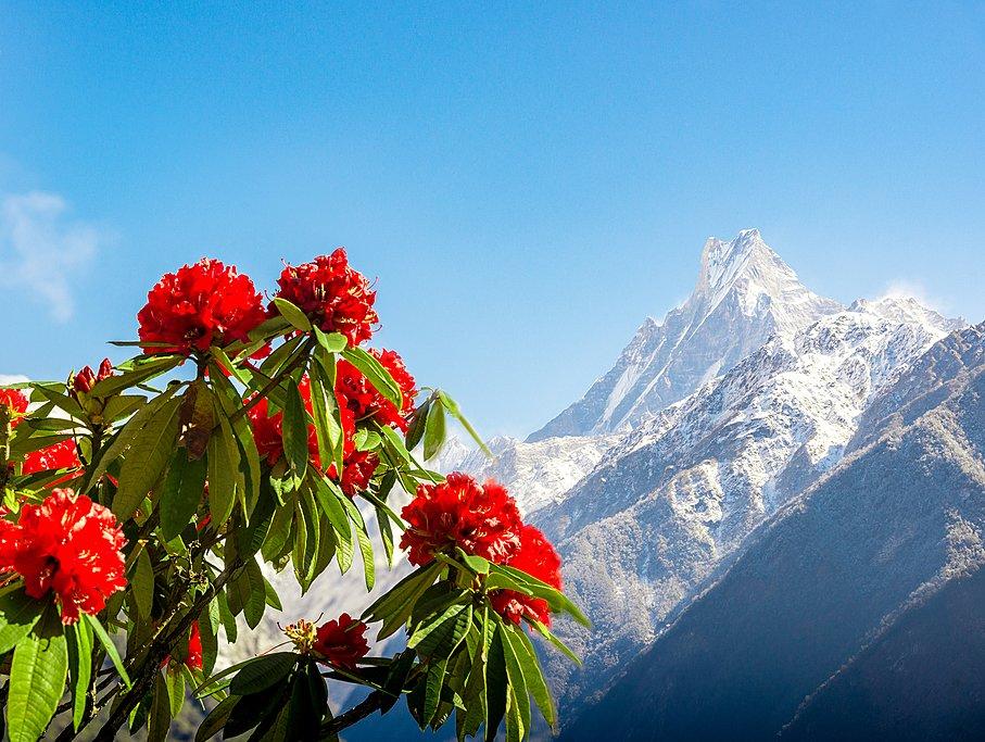 Nepal in April