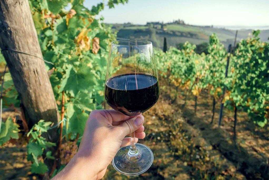 Wine tasting in a local vineyard