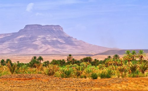 A desert oases in the Draa Valley, Morocco