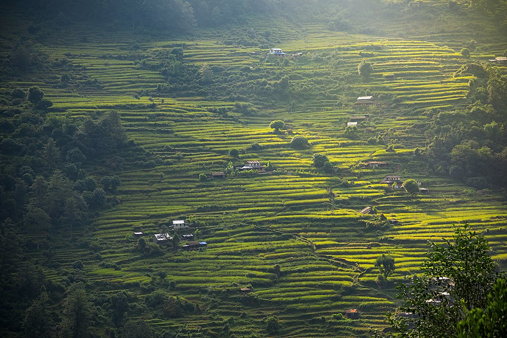 Farming terraces in the lower Annapurna region
