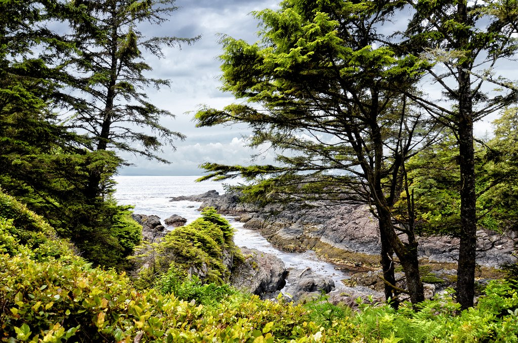 Wild Pacific Trail near Ucluelet, Pacific Rim